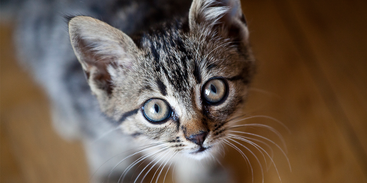 Download Adorable Cat Pictures Photos Images -H99qH2RF