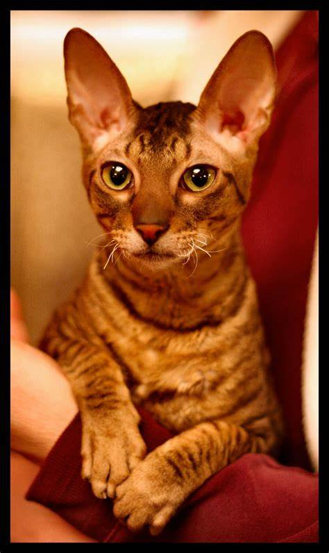 Download Adorable Cat Pictures Photos Images 38gH6Kmd_