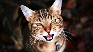Download Adorable Cat Pictures Photos Images 6gCm4NoBb