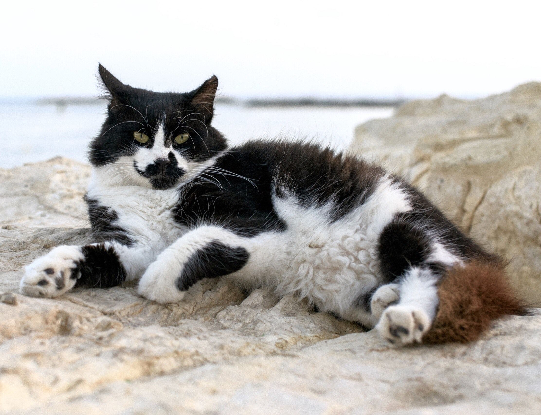 Download Adorable Cat Pictures Photos Images 8We6CSclb