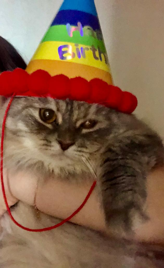 Download Adorable Cat Pictures Photos Images DWcvL4MmA