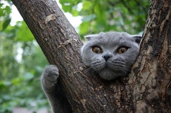 Download Adorable Cat Pictures Photos Images Dgut_T_Gi