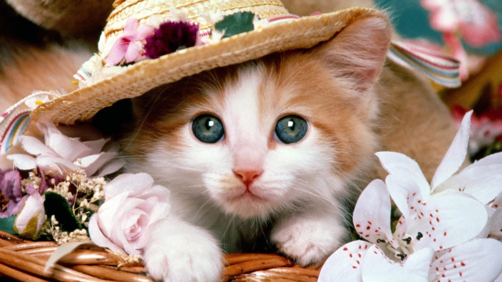 Download Adorable Cat Pictures Photos Images IBn4ir_Jv