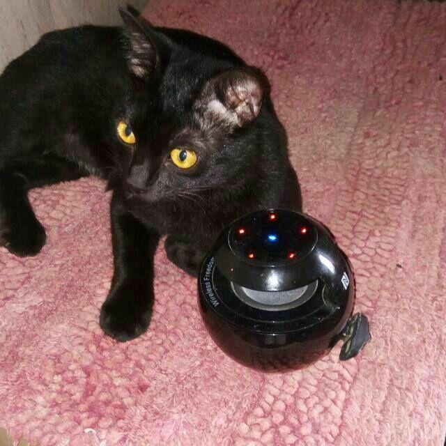 Download Adorable Cat Pictures Photos Images N4ScAR6jr