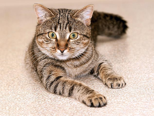 Download Adorable Cat Pictures Photos Images Ne6QmYtbQ