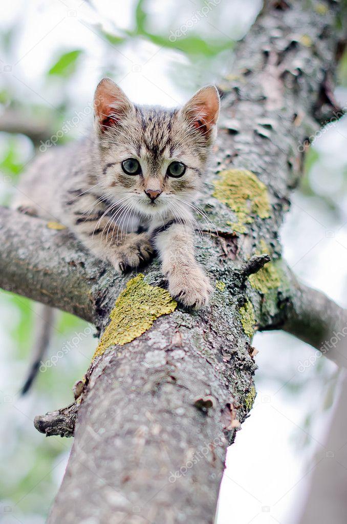 Download Adorable Cat Pictures Photos Images OXk2_GzW7