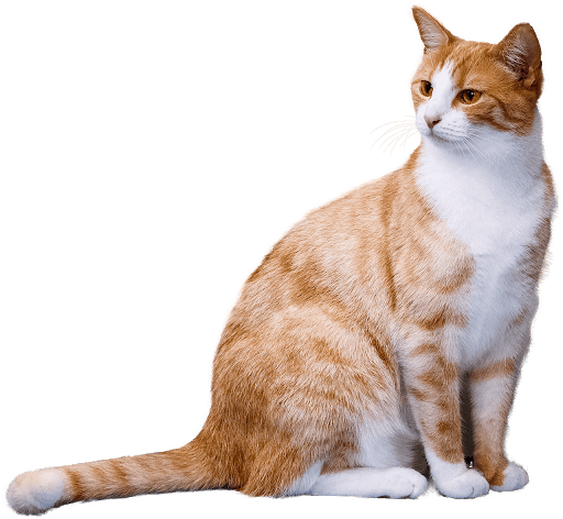 Download Adorable Cat Pictures Photos Images QMR71L-0e