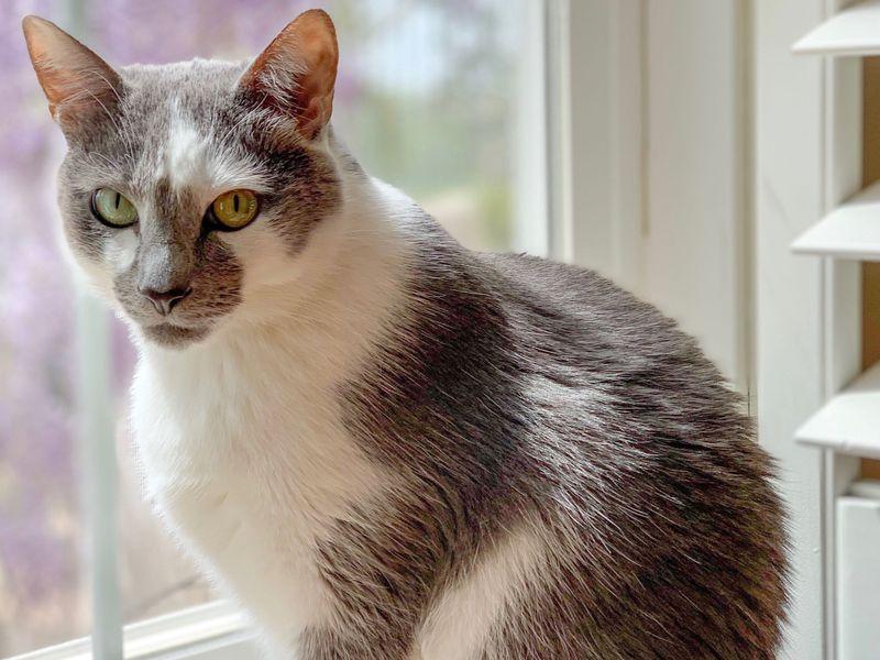 Download Adorable Cat Pictures Photos Images UelI52CDt