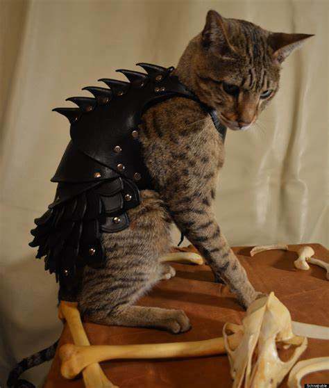 Download Adorable Cat Pictures Photos Images YQekJcppF