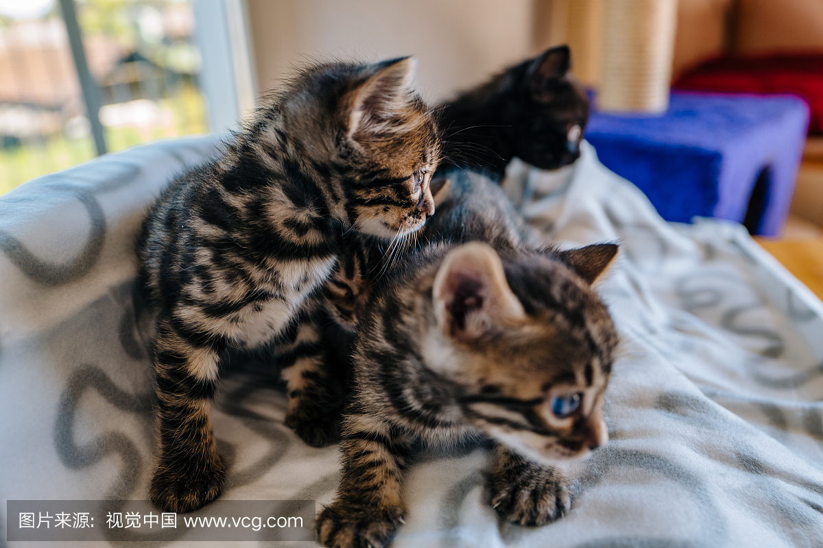 Download Adorable Cat Pictures Photos Images YTWh7RBvd