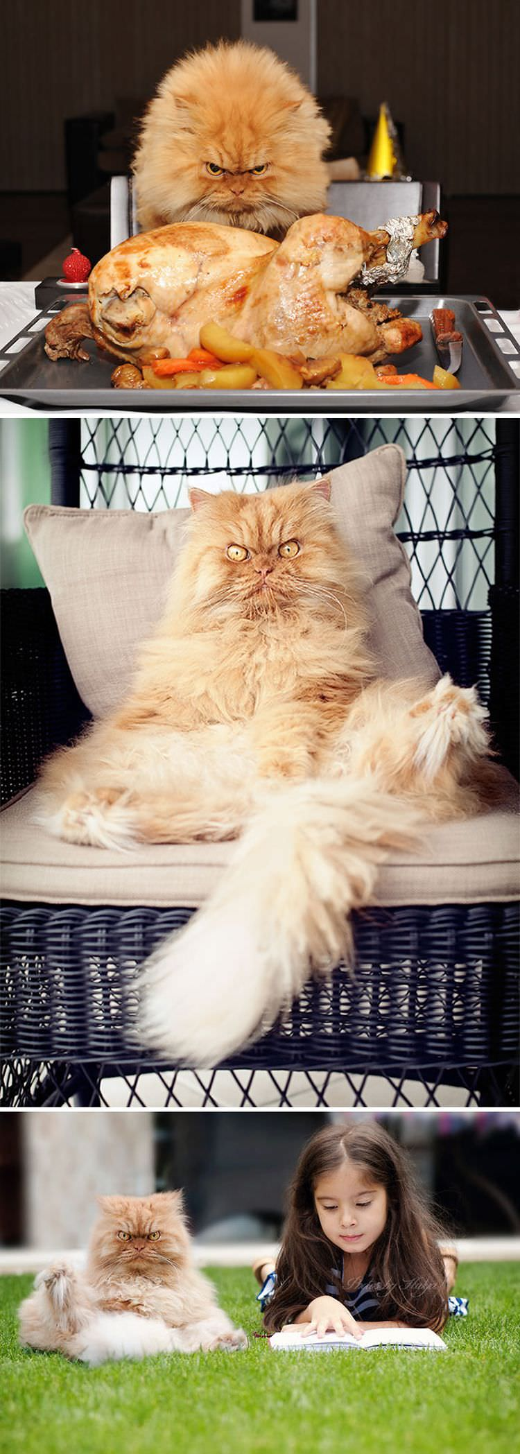 Download Adorable Cat Pictures Photos Images aDe-M4m18
