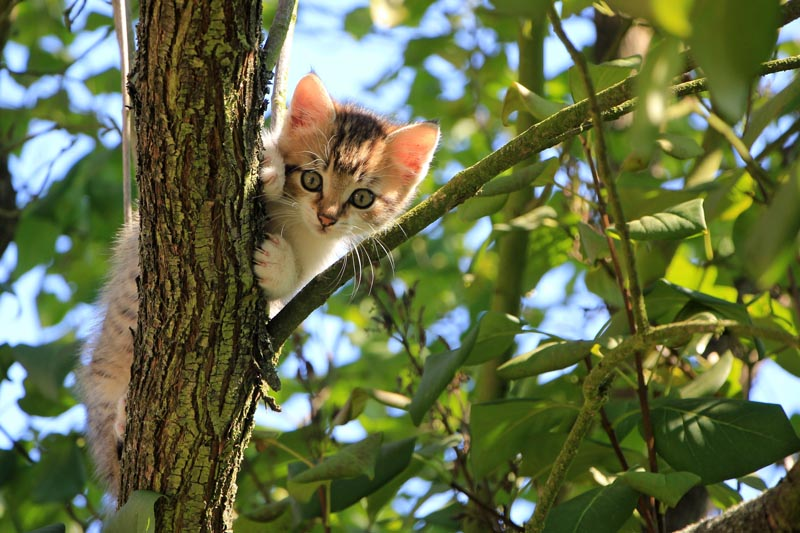 Download Adorable Cat Pictures Photos Images b3VrrWK2m