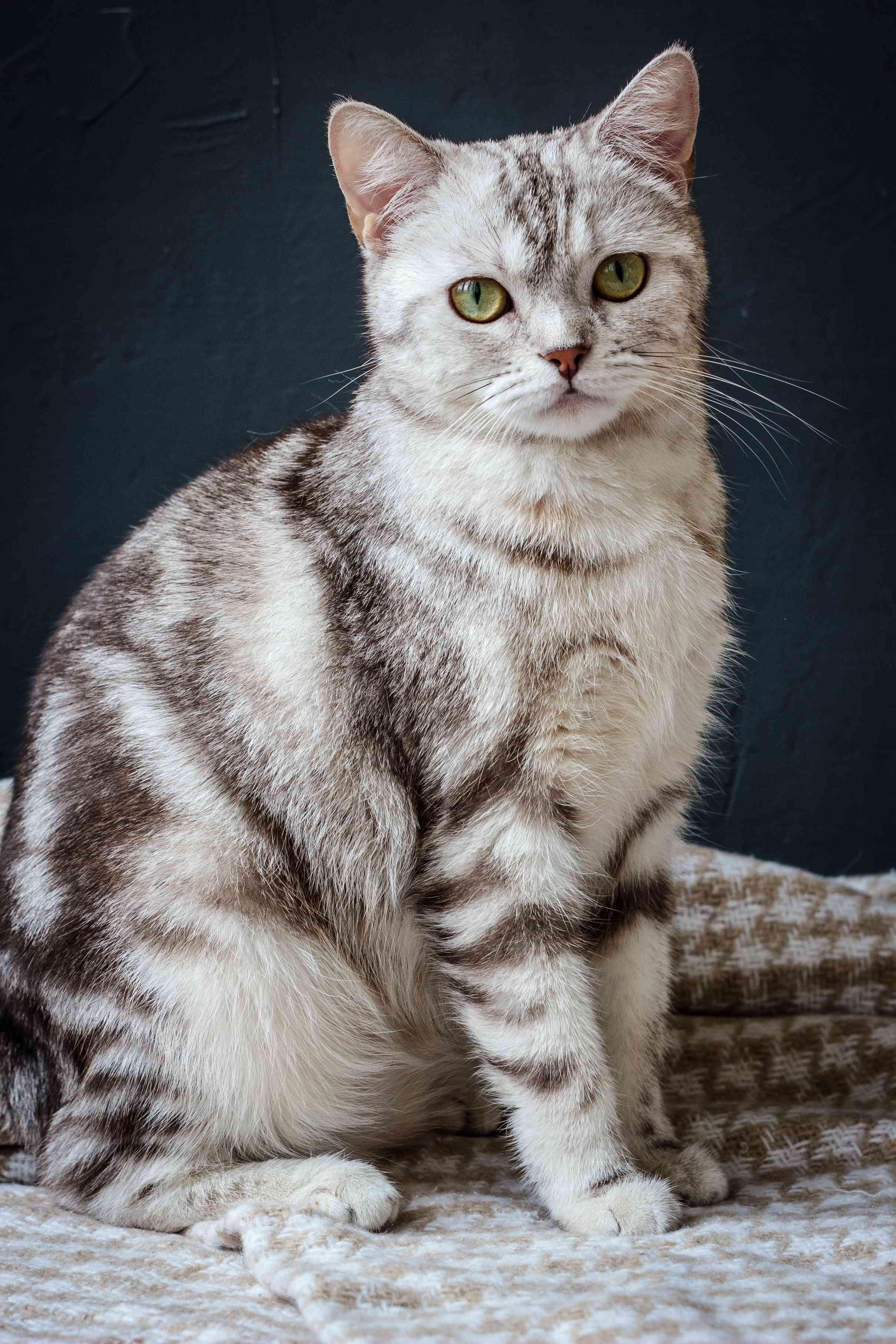 Download Adorable Cat Pictures Photos Images nfE6ekq7k