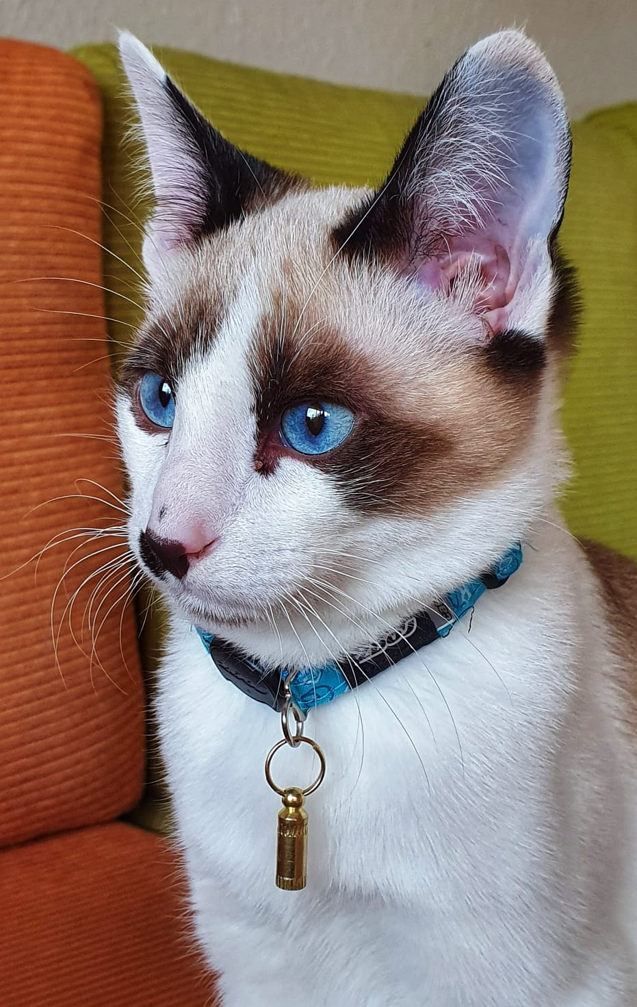 Download Adorable Cat Pictures Photos Images pfV-e1aYR