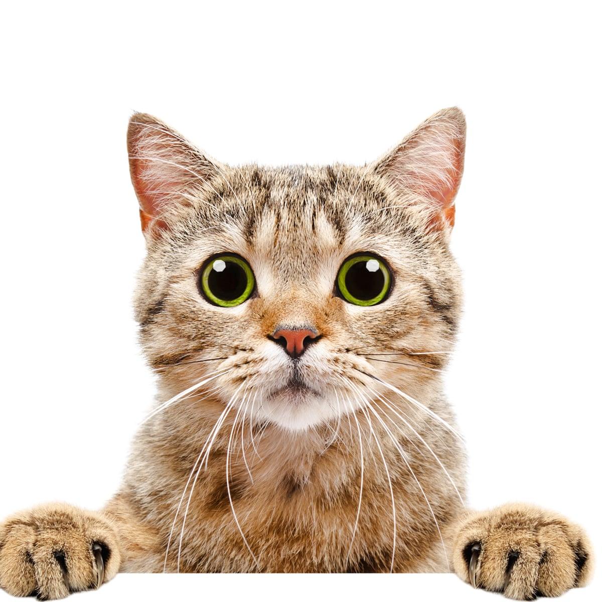 Download Adorable Cat Pictures Photos Images pib_sfrX8