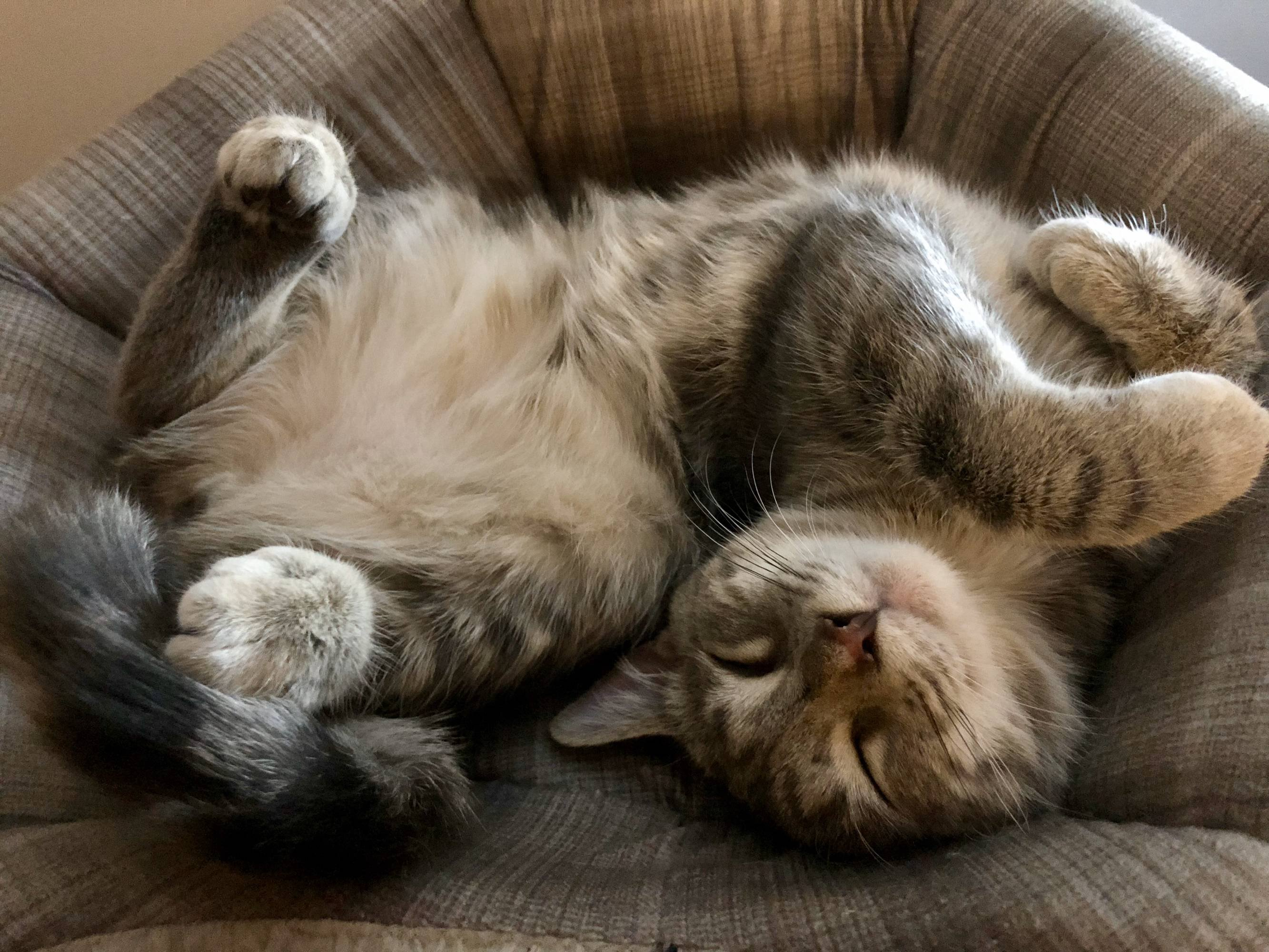 Download Adorable Cat Pictures Photos Images tOVh-Fi8-