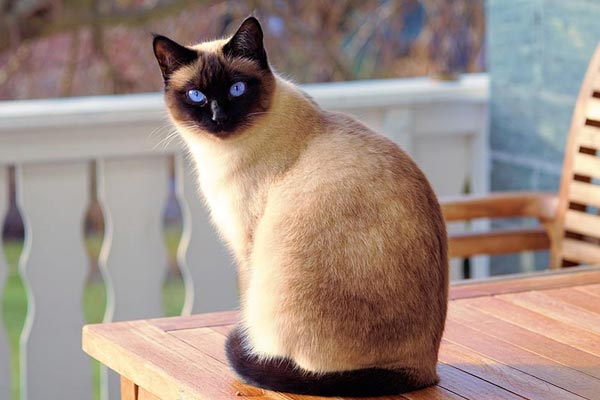 Download Adorable Cat Pictures Photos Images tZCWO4oi2