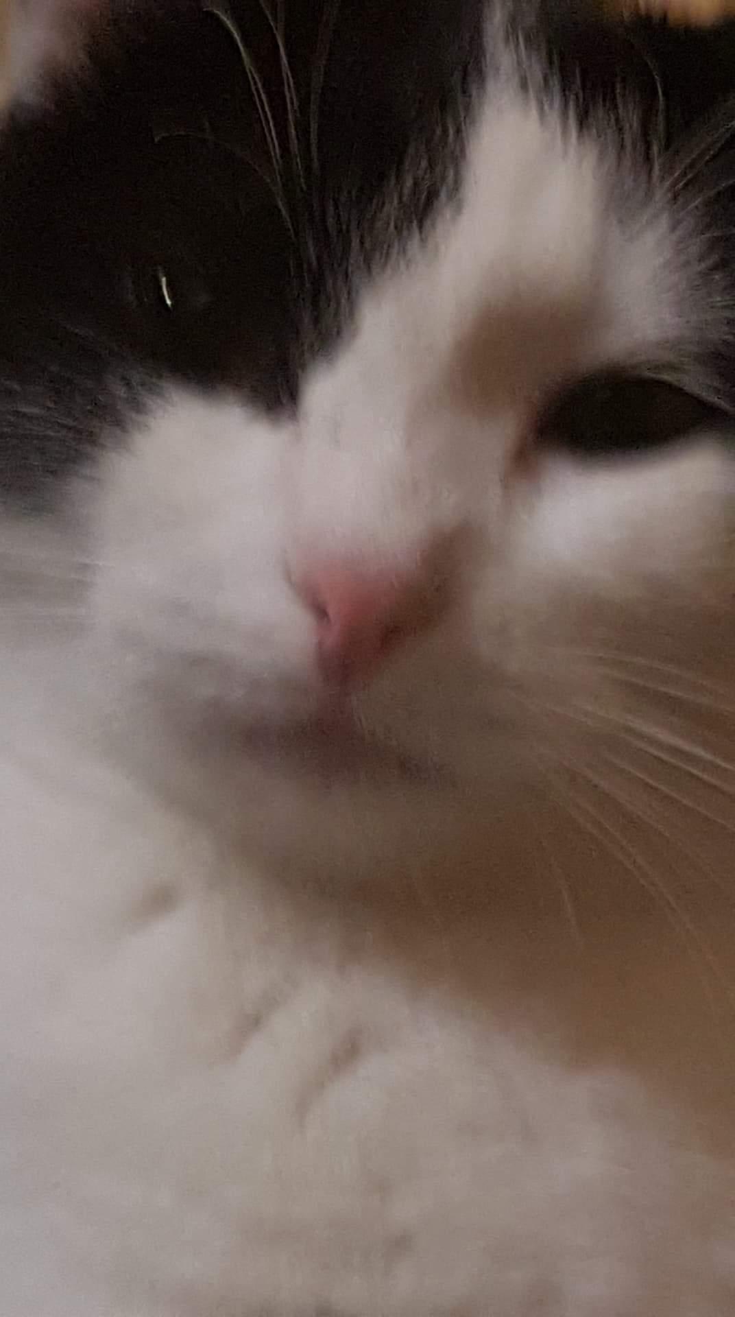 Download Adorable Cat Pictures Photos Images tadQ_zvrX