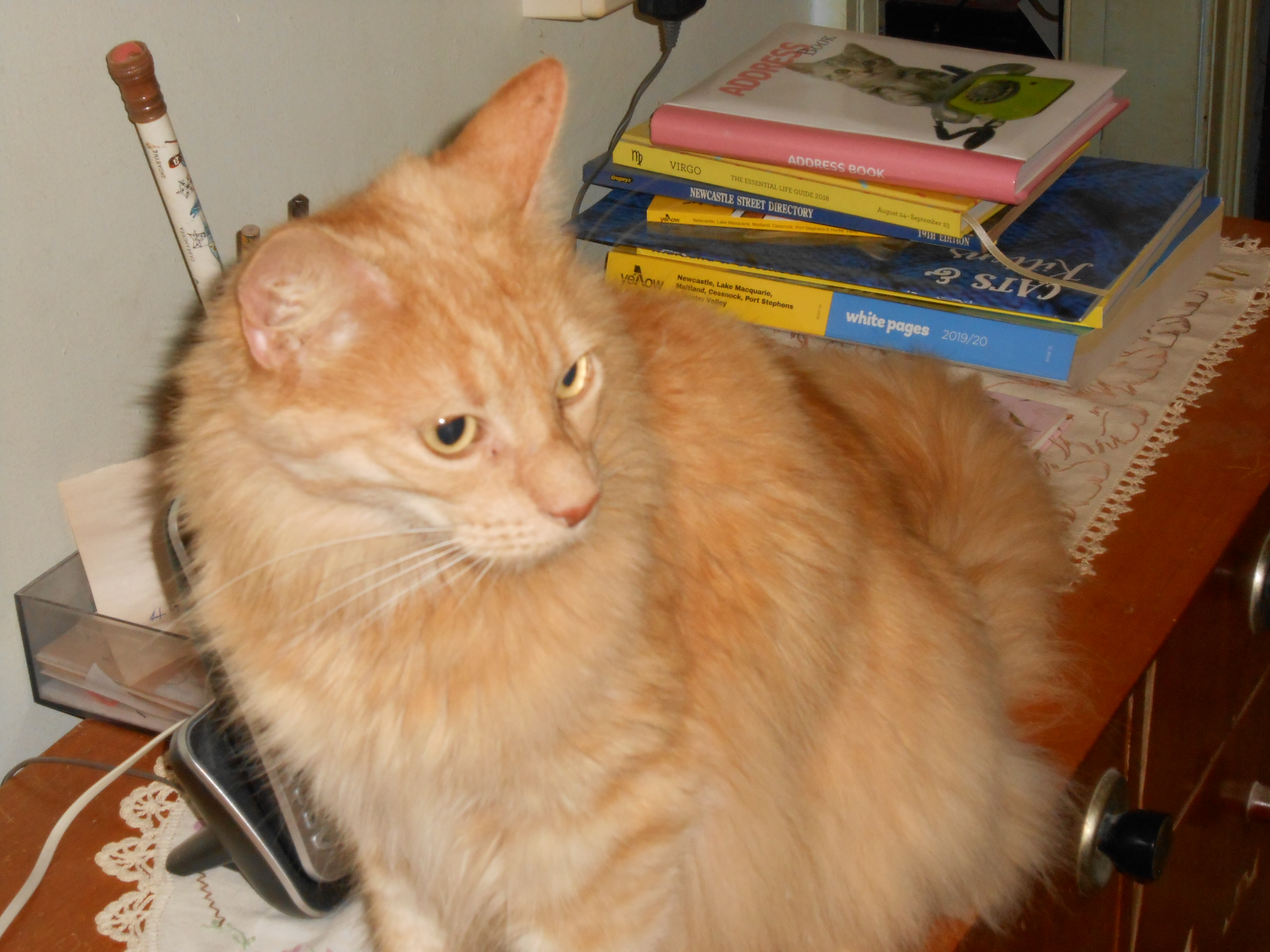 Download Adorable Cat Pictures Photos Images vCHWHvv1h