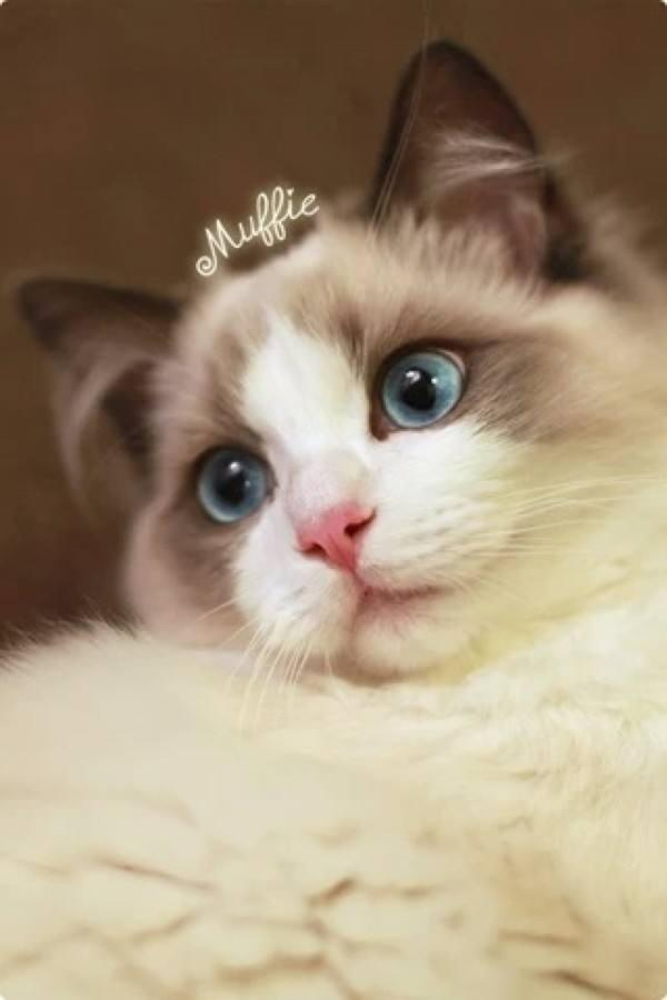 Download Adorable Cat Pictures Photos Images wNn218hjQ