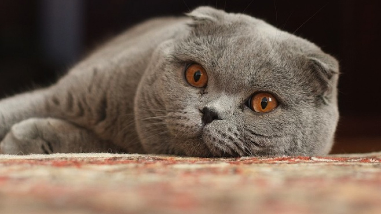 Download Adorable Cat Pictures Photos Images wtxI5FH0Q