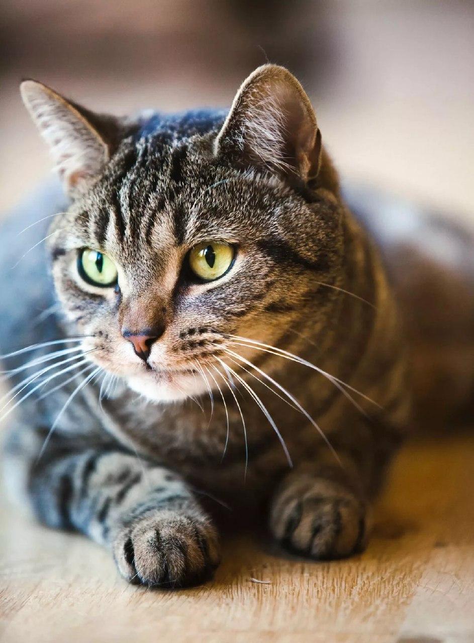 Download Adorable Cat Pictures Photos Images zqtEGxNbq